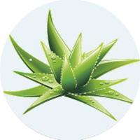icona pianta aloe vera